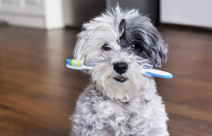 Why Your Pet Needs To See The Dentist